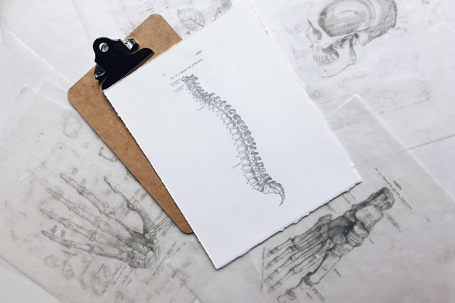 Back-Spine-Web
